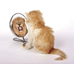 Spiegelgesetz