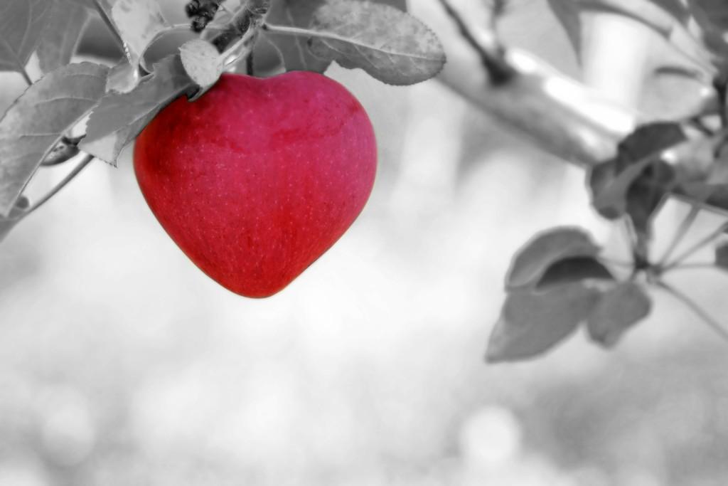 apple-570965_1920